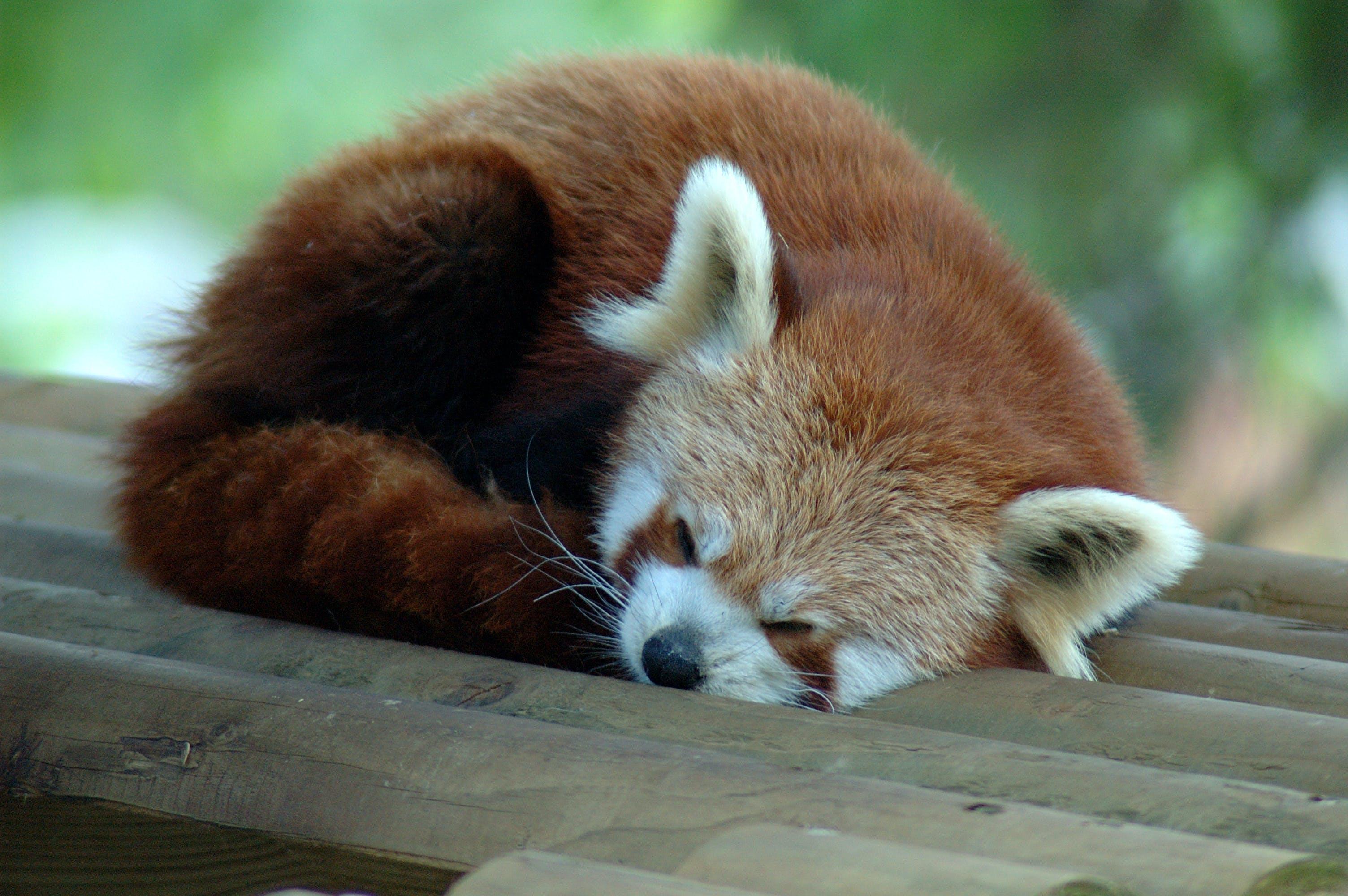 Firefox: Das sind die lahmsten Add-ons (Firebug gehört dazu...)