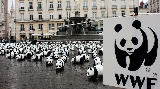 WWF-Shitstorm: Warum Krisenkommunikation nicht um 18 Uhr enden sollte