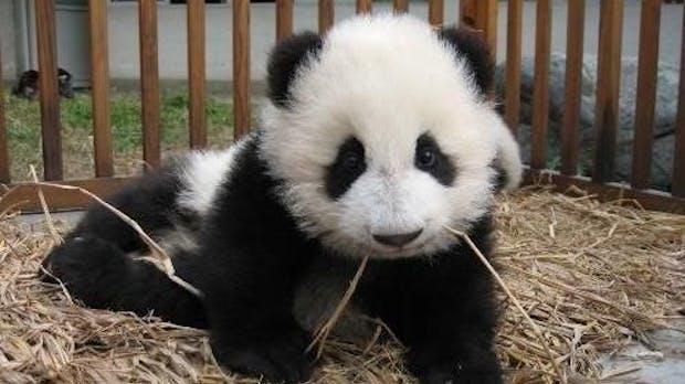 Panda Update: 5 Sünden, die Google jetzt bestraft