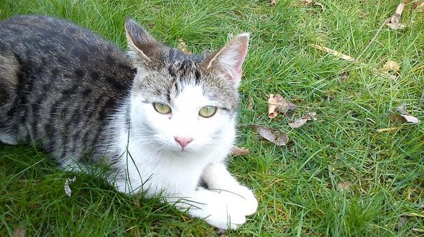 WarKitteh-Halsband: So spürt deine Katze offene WLANs in der Umgebung auf