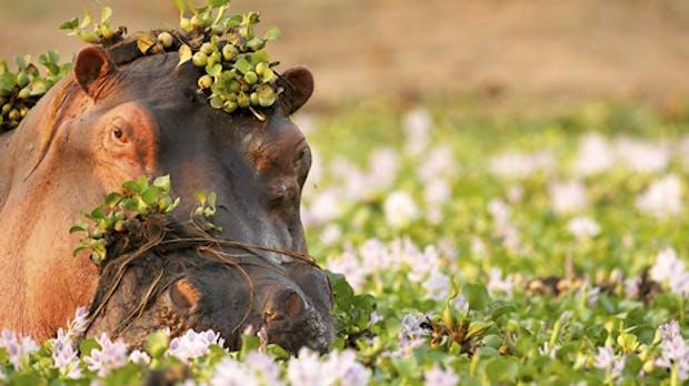 Hippo: Das steckt hinter dem Open-Source-CMS