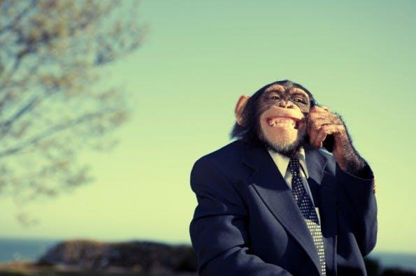 business monkey