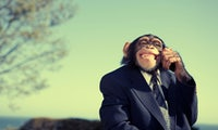 Warum uns Business-Affen das Leben unnötig schwer machen [Glosse]
