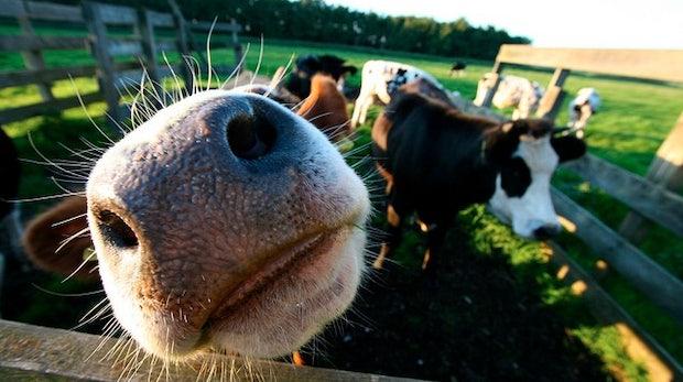 500.000 Euro abgeräumt: Farmville-Bauern sichern sich Agrarsubventionen [Update: Hoax]