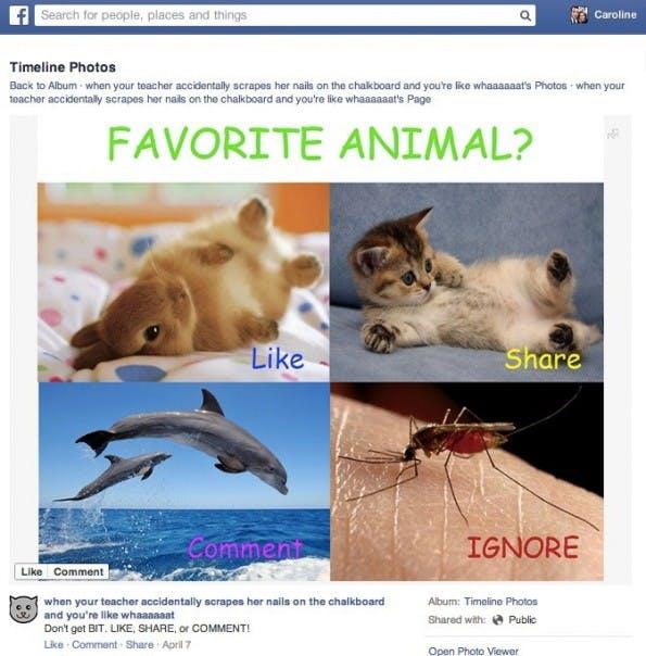 Im Facebook-Newsfeed soll es zukünftig keine Like-Bait-Beiträge wie diesen mehr geben. (Quelle: Facebook)