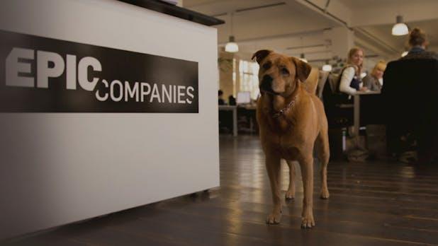 Startup-Inkubator in der Krise? Epic Companies vor Neustrukturierung