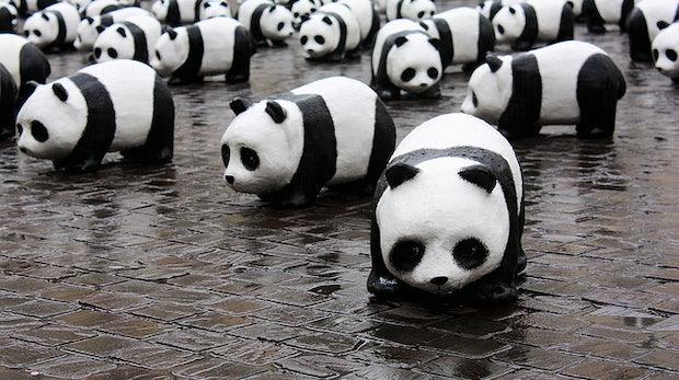 Google Panda: Nächstes Update soll in den kommenden Wochen ausgerollt werden