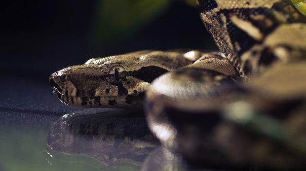 Sechs Gründe, warum ihr spätestens 2020 Python lernen solltet
