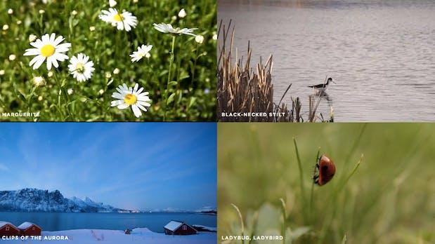 Richtige coole Clips für dein nächstes Projekt: Mazwai bietet kostenlose Videos an