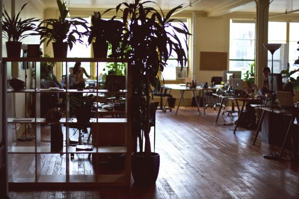 Pflanzen im Büro erhöhen merklich die Produktivität. (Foto: Dave Fayram / Flickr Lizenz: CC BY 2.0)