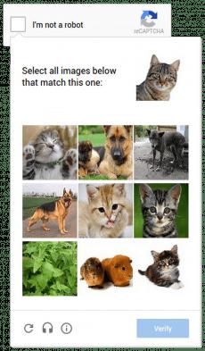 Katzenbilder sollen auch auf dem Smartphone für bequeme Captcha sorgen. (Screenshot: Google)