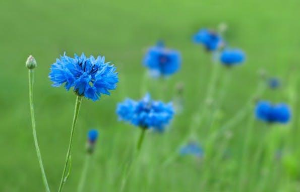 Blau eines der Dinge ist, die man nicht erklären kann. (Foto: Shutterstock/Buslik)
