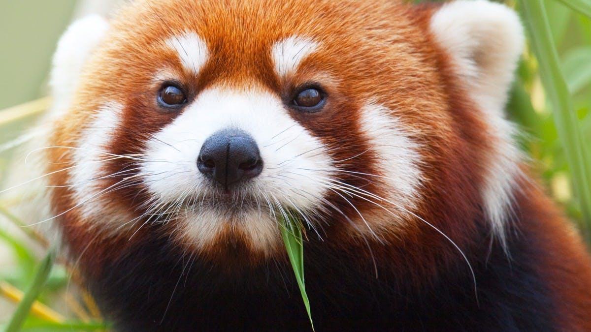 Mozilla verärgert Nutzer mit ungefragter Addon-Installation