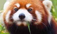 Bessere Performance: Mozilla will Firefox-Bugs mit Machine Learning finden