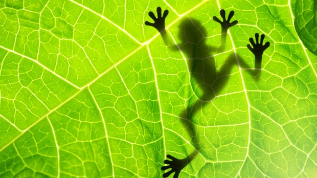 Screaming Frog: So nutzt du das SEO-Tool optimal