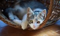 Ablenkung im Büro: Wie Katzenvideos dich produktiver machen könnten