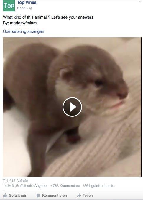 Tiervideos erfreuen sich auf Facebook einer großen Beliebtheit. (Screenshot: Facebook)