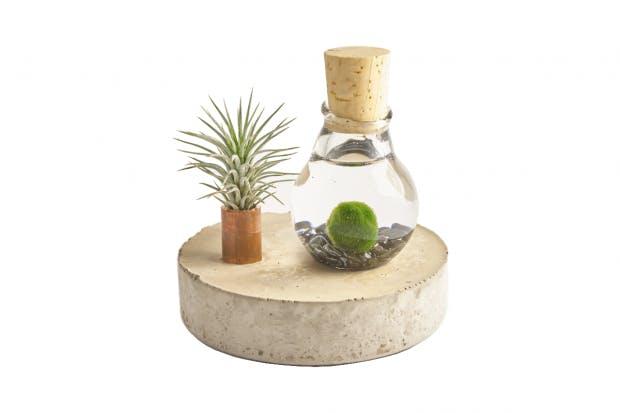 Eine Luftpflanzen-Kreation von GlassworkRuhr. Foto: GlassworkRuhr)