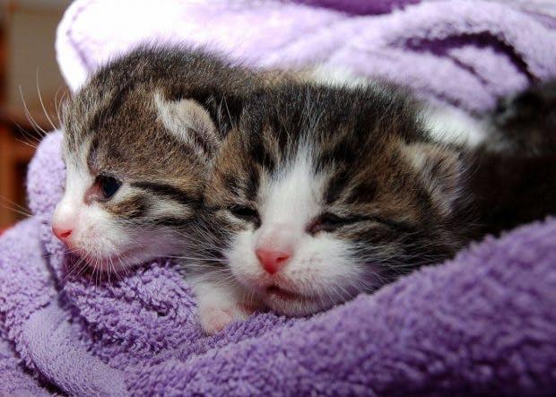 Vorsicht: diese süßen Kätzchen könnten für ein perfides Spiel missbraucht worden sein. (Foto: Pixabay.vom)