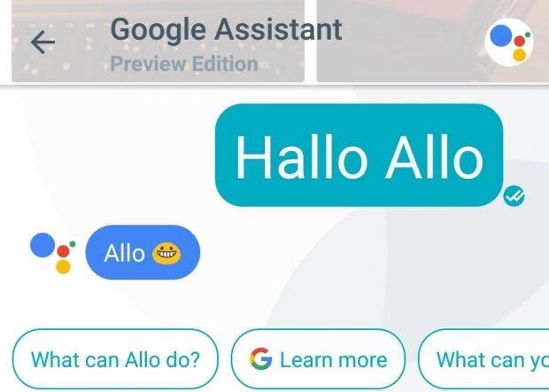 """Der Google Assistant sagt in Allo brav """"Hallo"""". (Screenshot: t3n)"""