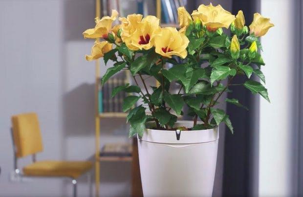 Der Parrot Pot ist ein Blumentopf, der sich automatisch um eure Zimmerpflanzen kümmert. (Foto: Parrot Pot)