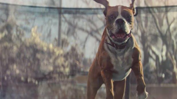 Das sind die viralsten Video-Kampagnen des Jahres