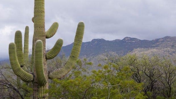 Ebenso wenig wie diesen Kaktus, solltest du bestimmte Personen zu nah an dich heranlassen. (Foto: Pixabay)