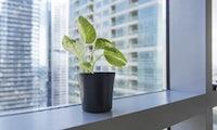 Warum die Wahl der Büropflanzen Einfluss auf die Luftqualität hat