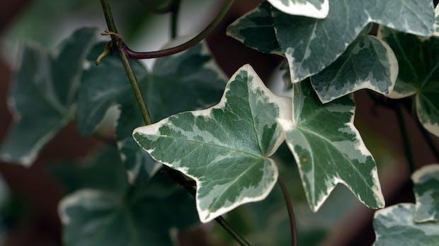 Evergreen-Content: Was ist das und wie pflegt man ihn?