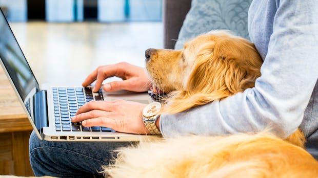 Der Wau-Effekt: Darum solltet ihr über einen Bürohund nachdenken