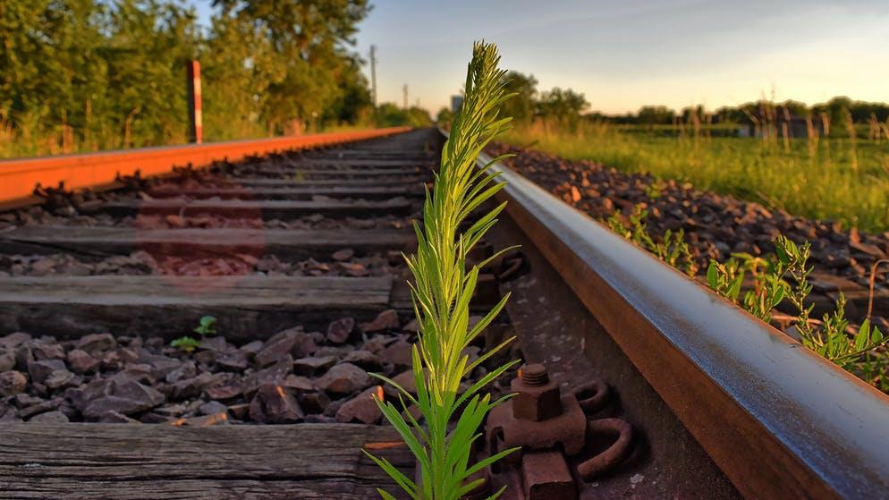 Ruby on Rails: Warum immer weniger Interesse an dem Framework besteht