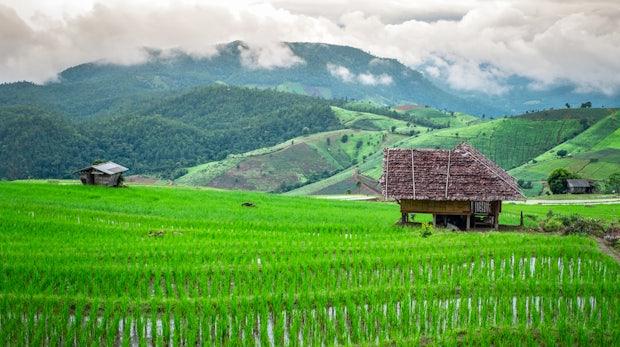 Ein Büro im Reisfeld - Bali wird zum Ziel digitaler Nomaden