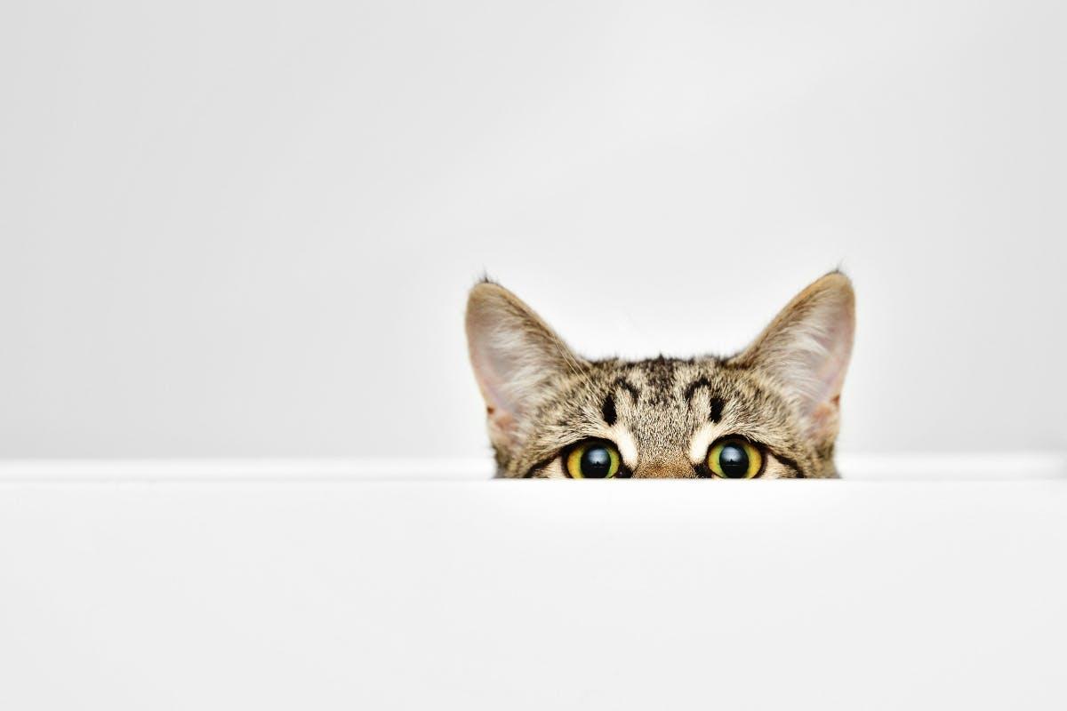 Diese KI zeigt euch Bilder von Katzen – mit gemischten Ergebnissen