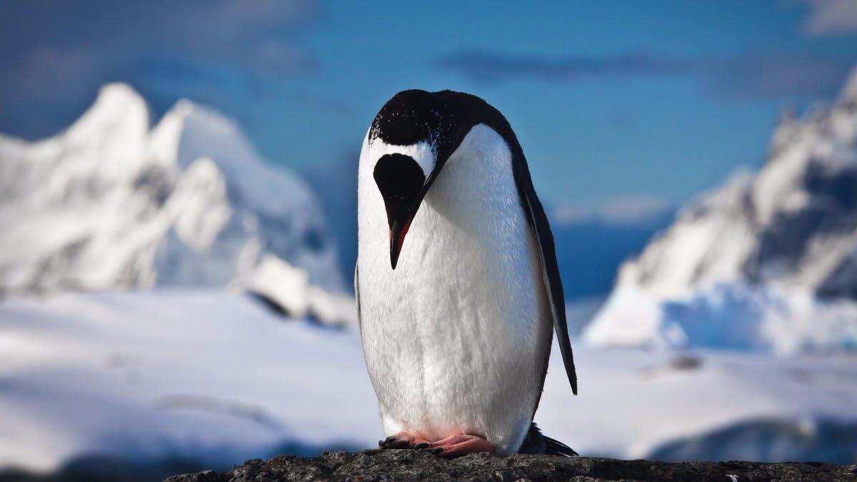 Selbstmord-Linux ist Folter für Geeks