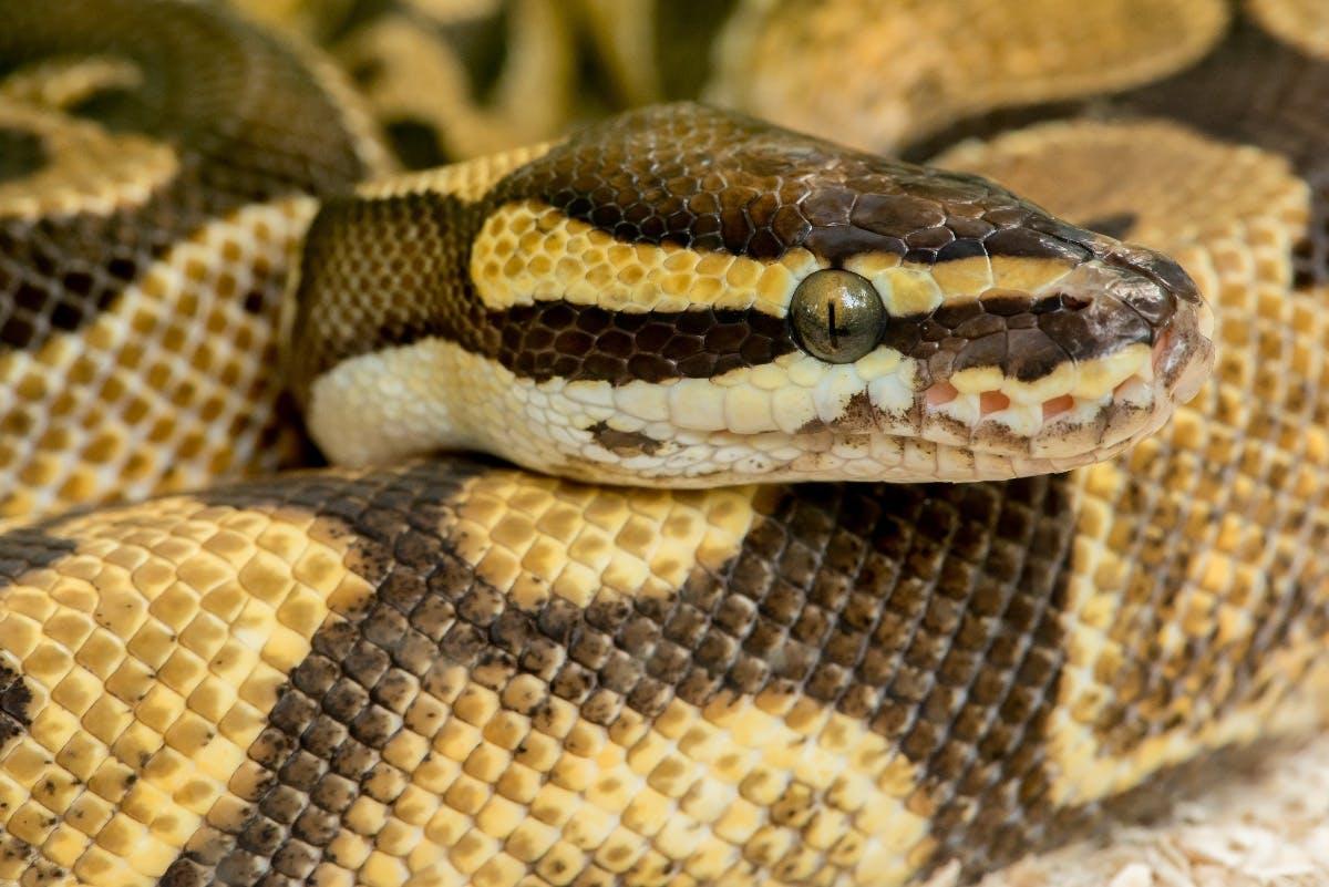 Crash-Kurs mit Python und Machine Learning: Einstieg in Scikit-Learn