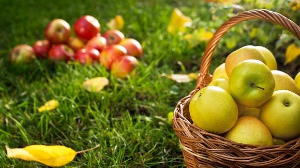 Low-Hanging-Fruits: Der indirekte SEO-Motor