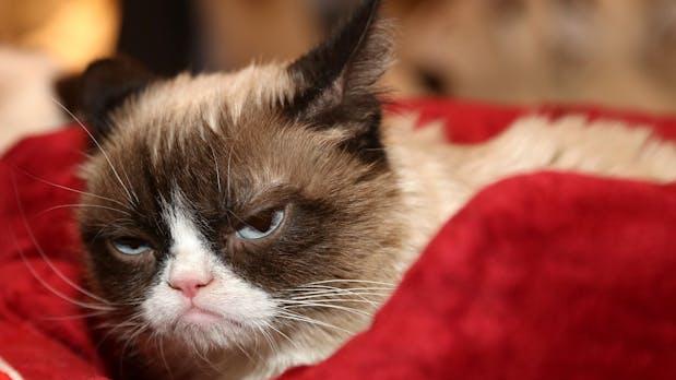 Grumpy Cat gewinnt Copyright-Rechtsstreit