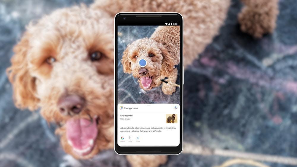 Google Lens erkennt für euch, ob's ein Pudel oder Labradoodle ist. (Bild: Google)