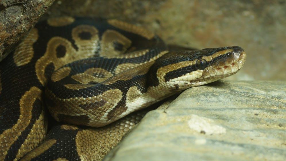 Auch unter Hackern ist Python beliebteste Programmiersprache