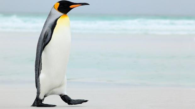 Linux-Kernel 5.3 bringt Unterstützung für neue Grafikchips und alte Diskettenlaufwerke