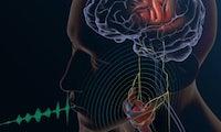 US-Forscher erzeugen Sprache aus Hirnströmen – Sprachsynthese