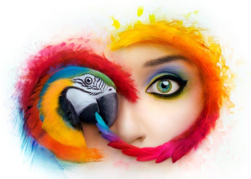 Adobe Creative Cloud: Die neuen Updateregeln verärgern zahlreiche Kunden