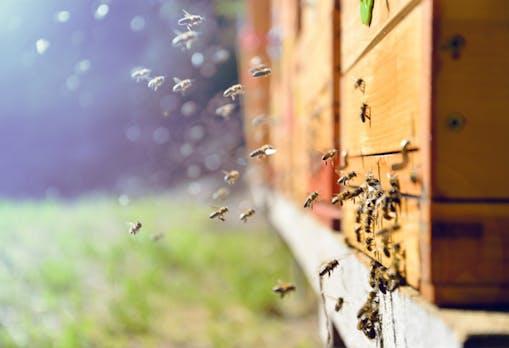 Was wir von Bienen für die digitale Arbeitswelt lernen können
