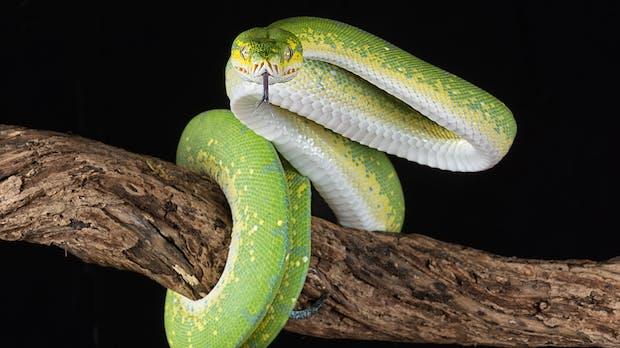 6 Gründe, warum ihr spätestens 2020 Python lernen solltet