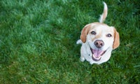 Nvidia-KI: Wie würde dein Haustier als anderes Tier aussehen?