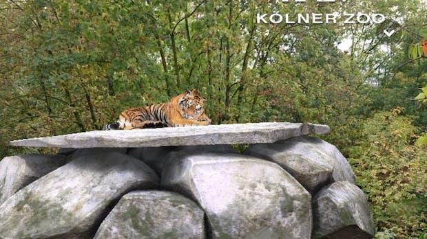 Virtuelle Tiger im Kölner Zoo: So sieht Snapchat-AR-Marketing in der Praxis aus