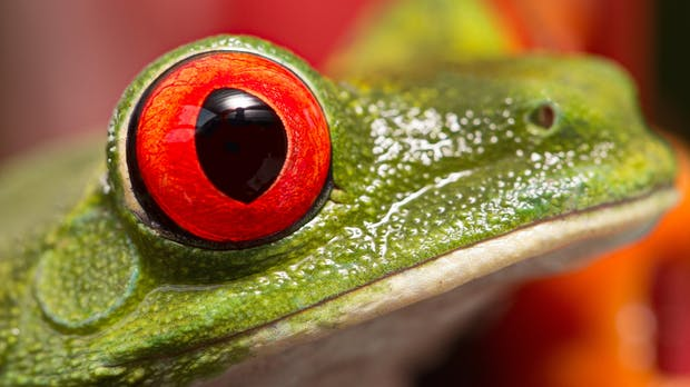 Wie sehen eigentlich Tiere die Welt? Diese Software zeigt es euch