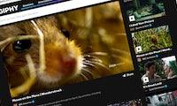 Nichts für GIF-Puristen: Giphy startet Video-Seite – mit Ton