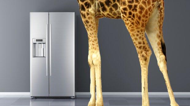 Brainteaser im Vorstellungsgespräch: eine Giraffe, ein Elefant und ein Kühlschrank