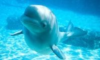 KI rettet Kegelrobben und Belugawale: Was neue Technologien leisten können